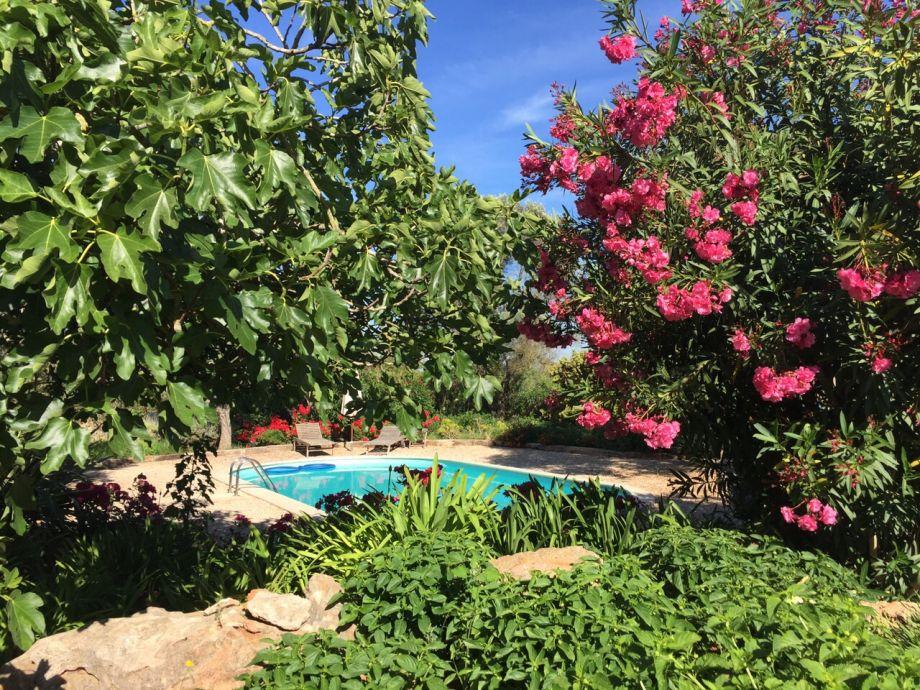 Der Pool und Garten