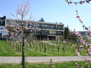 Ferienhaus Weinblick
