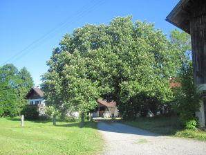 Bauernhof Steingaden
