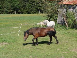 Ferienwohnung Urlaub auf dem Bauernhof