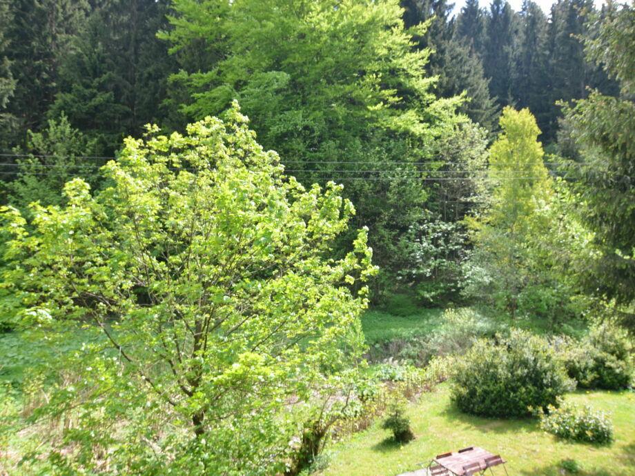 Außenaufnahme Waldblick