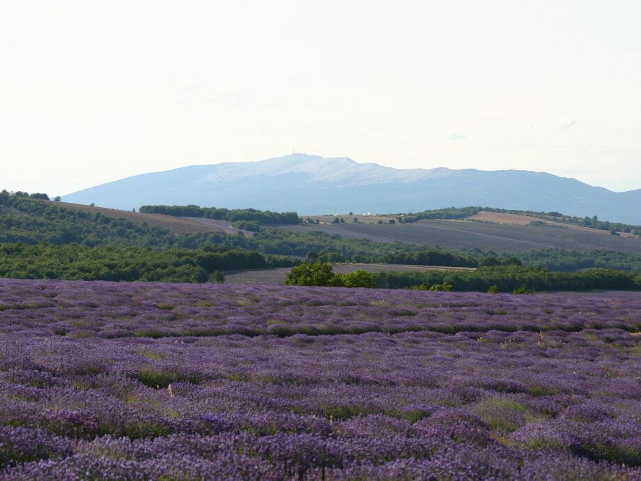 Außenaufnahme Entre Pins et Vignes