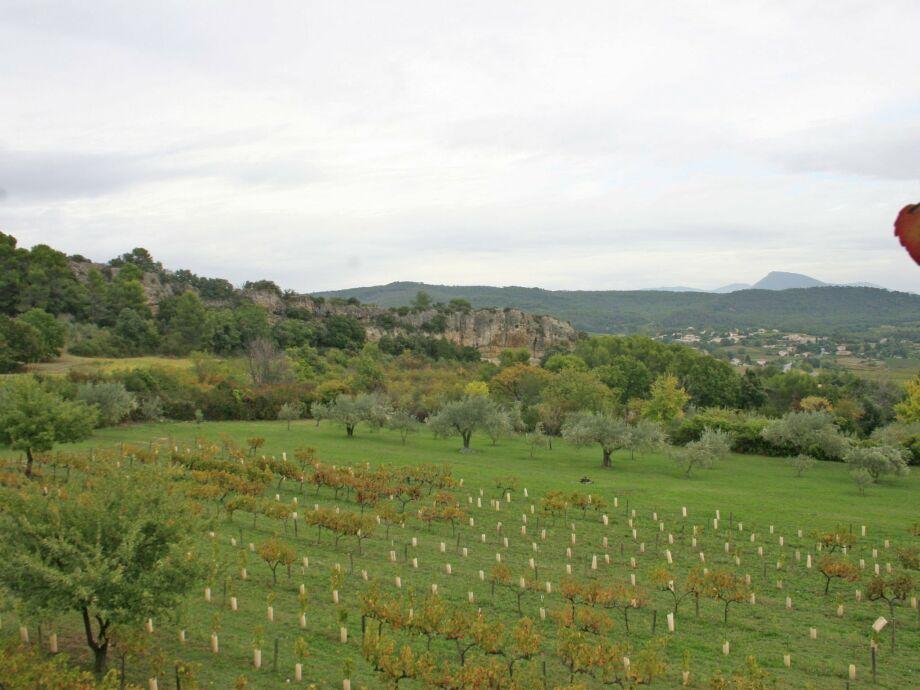 Außenaufnahme Le Grand Cedre