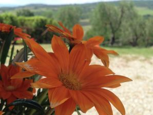 Bauernhof Podere Torricella Piano Terra