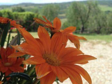 Bauernhof Podere Torricella