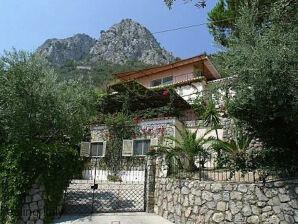 Villa Rita Ficus