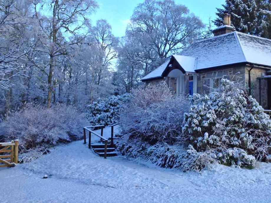 Tuim blanketed in snow