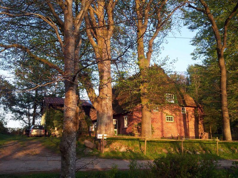 Ferienhaus Romantisches Reetdachhaus