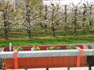 Ferienwohnung Apfelblüte