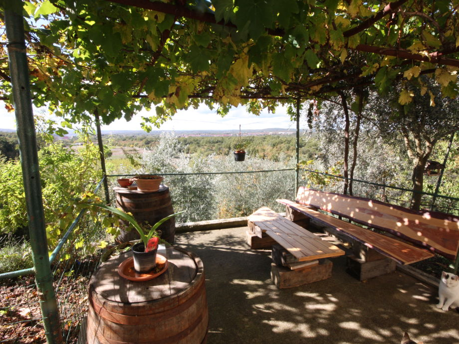 Patio under the vines