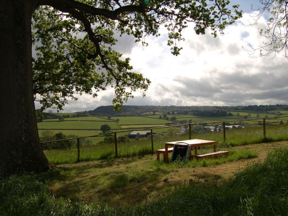 The BBQ area near ancient Oak Tree