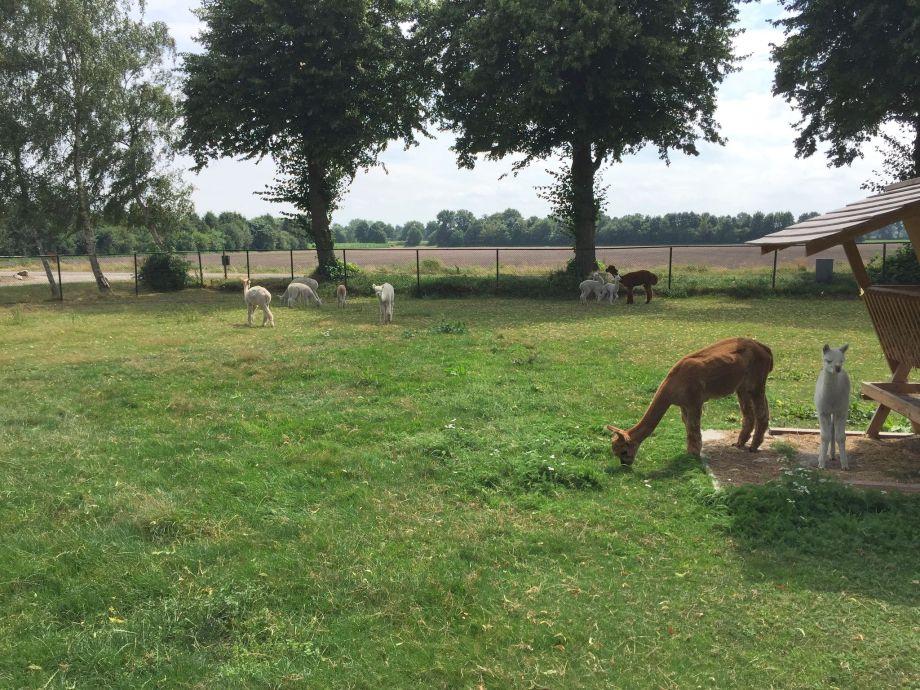Außenaufnahme Alpacafarm Vorstenbosch