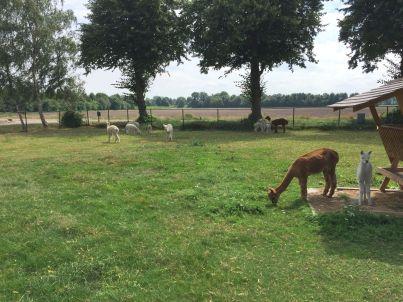 Alpacafarm Vorstenbosch