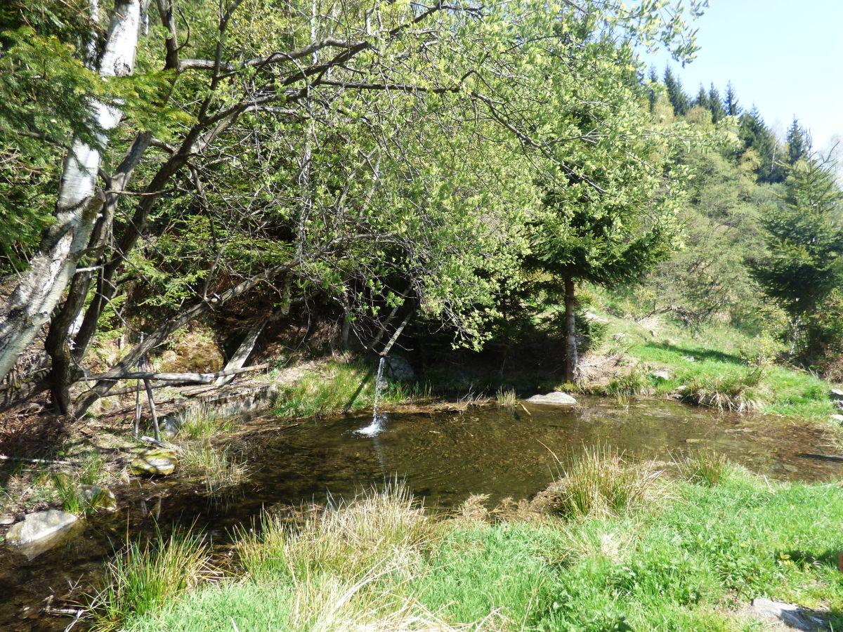 Ferienhaus obertalerhof meraner land frau laura pr nster for Teich mit fischen