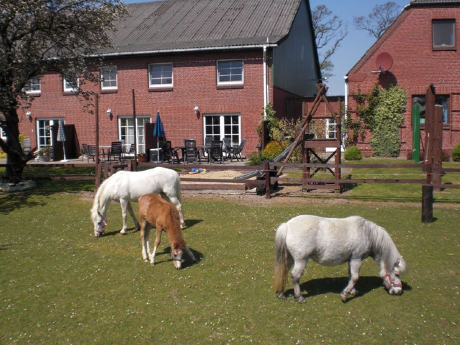 Terasse mit Spielplatz & Ponyweide