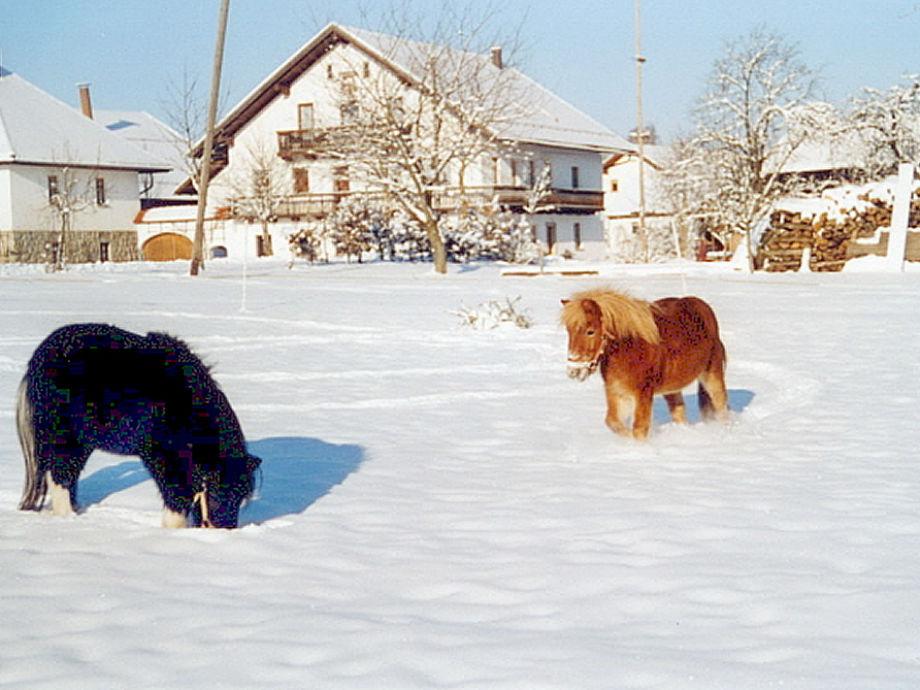 Bauernhofurlaub auf dem Gründingerhof