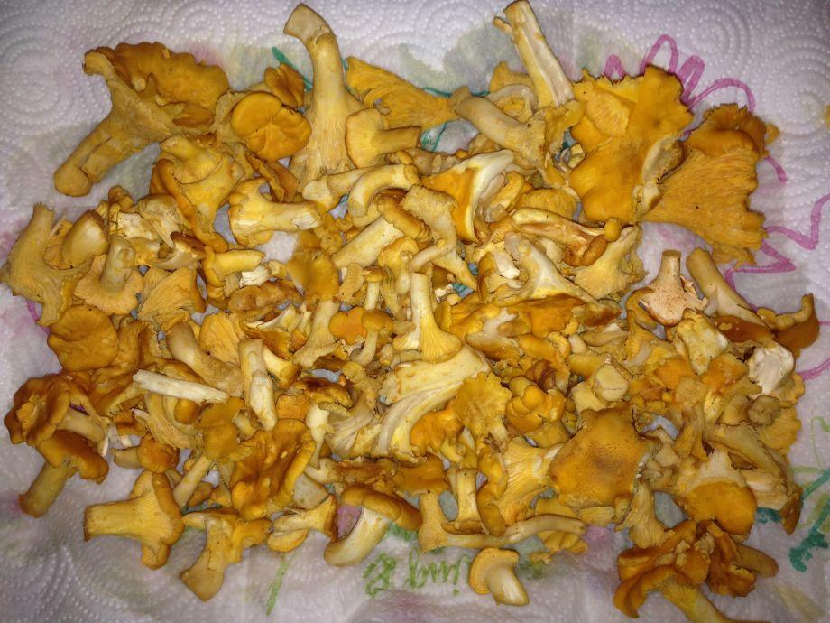 Gourmet Aus Dem Wald Brennnessel Spinat u2014 Rezepte Suchen