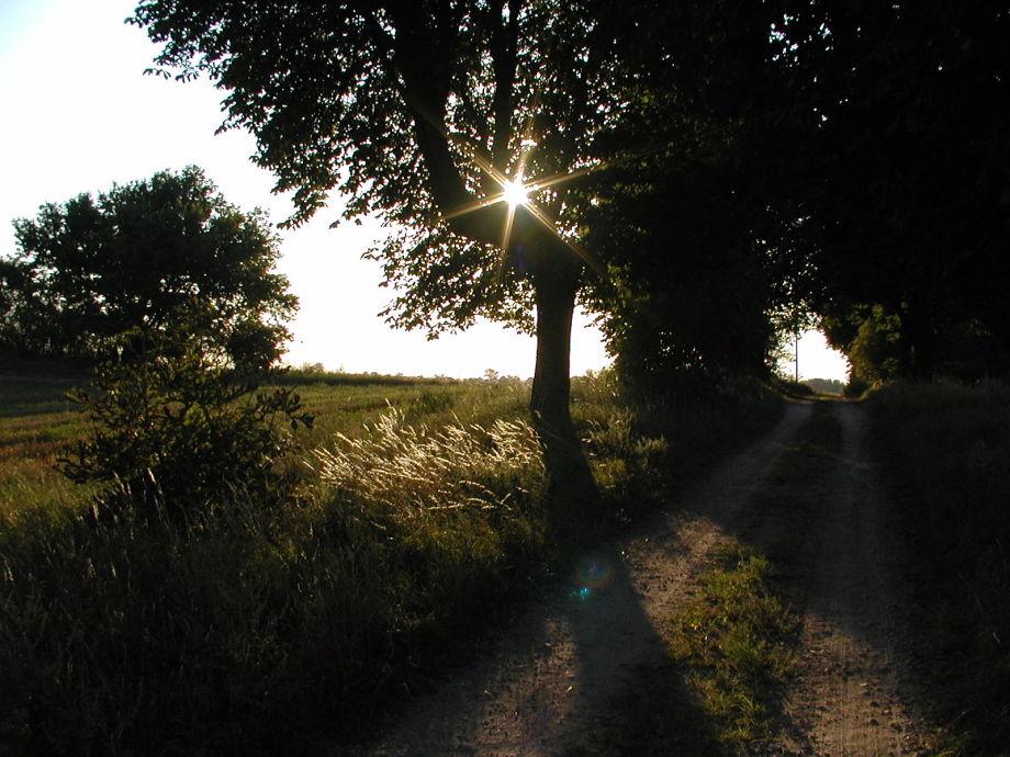 """Der Weg zur """"Alten Ziegelei"""" führt sie..."""