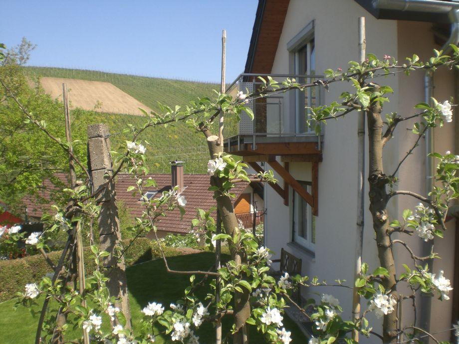 Garten mit blühender Apfelanlage