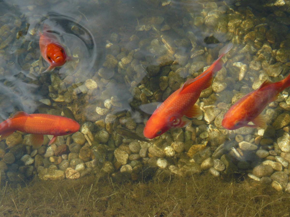 Ferienwohnung geli in simmelsdorf frankenalb frau for Teich winter fische