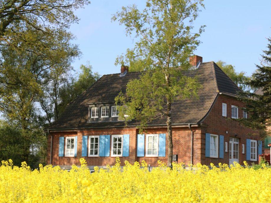 Rapsbluete Birkenhof