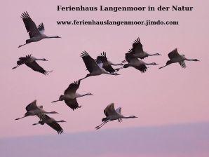Ferienhaus Langenmoor in der Natur