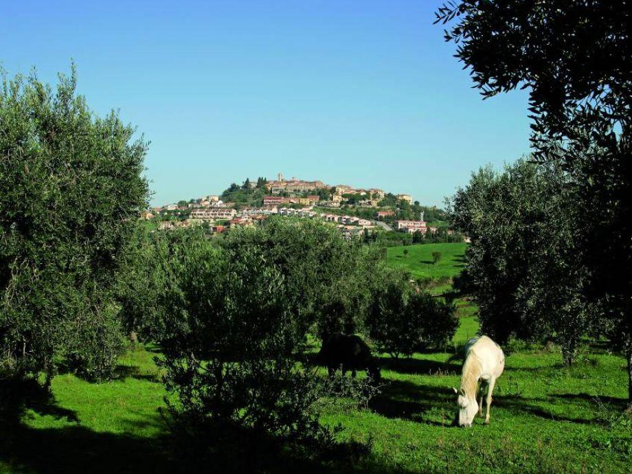 Family cottage california toskana toskana montalto di for Family cottages