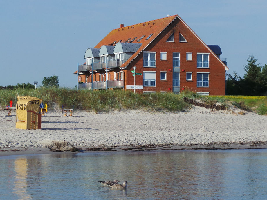 Strandschwalbe im Ostseeblick
