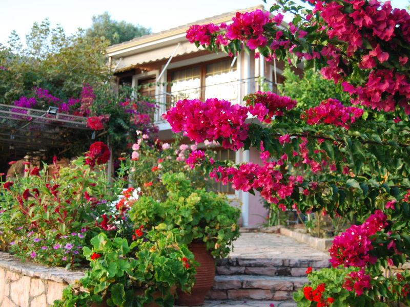 Ferienwohnung in der Villa Niki - Traumsicht