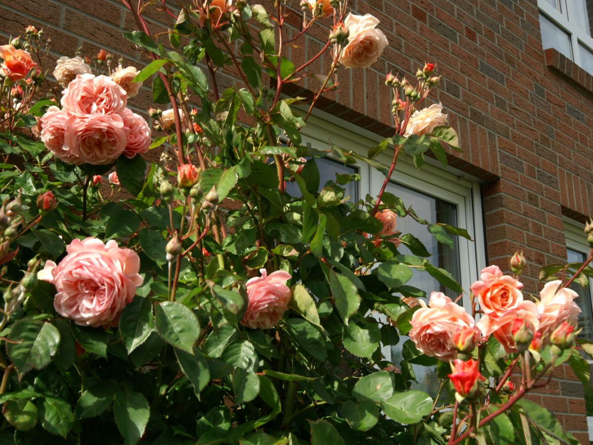 rosen im garten umsetzen kompost im garten umsetzen wohnen. Black Bedroom Furniture Sets. Home Design Ideas