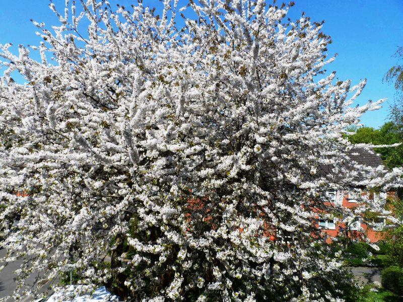 Ferienwohnung An den Kirschbäumen