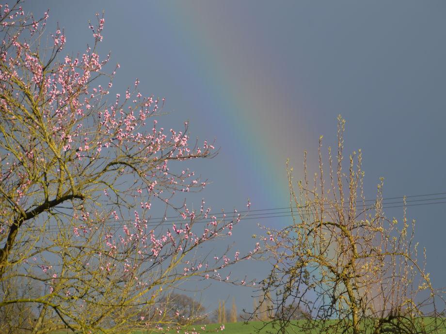 Blühender Pfirsich im Garten