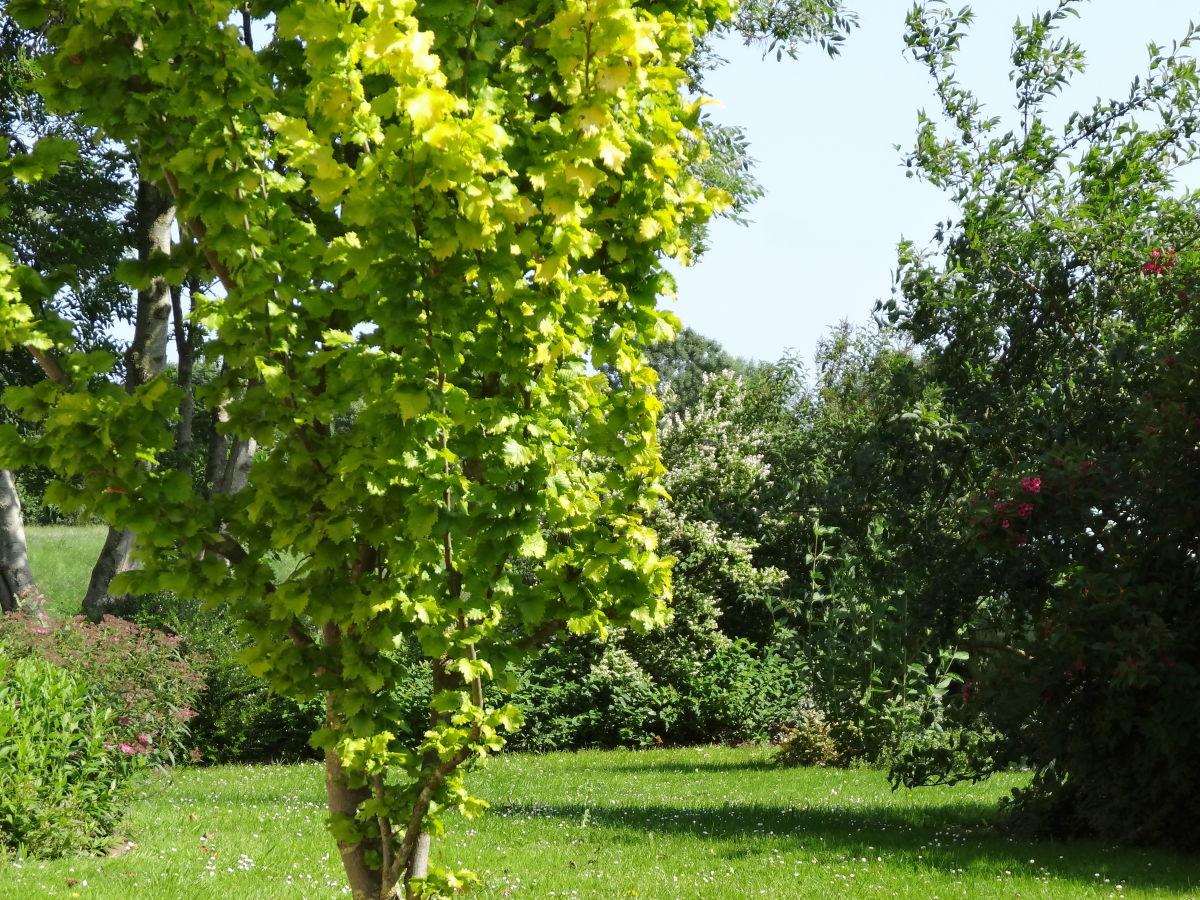 Ferienwohnung Steinberg Ostsee Schlesw Holst Geltinger For Garten Nordseite  · Vorgarten Anlegen ...