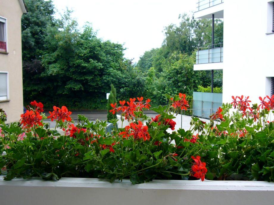 Im Sommer kein Seeblick vom Balkon.