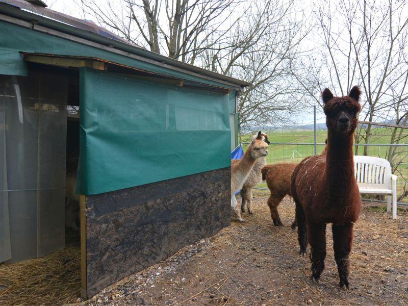 Ferienwohnung Alpaka-Farm