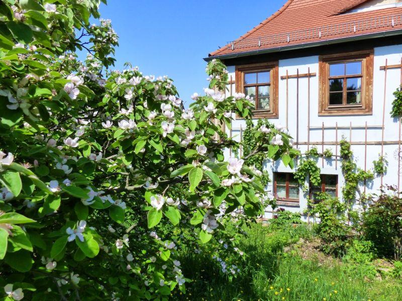 Ferienhaus Romantisches Winzerhaus