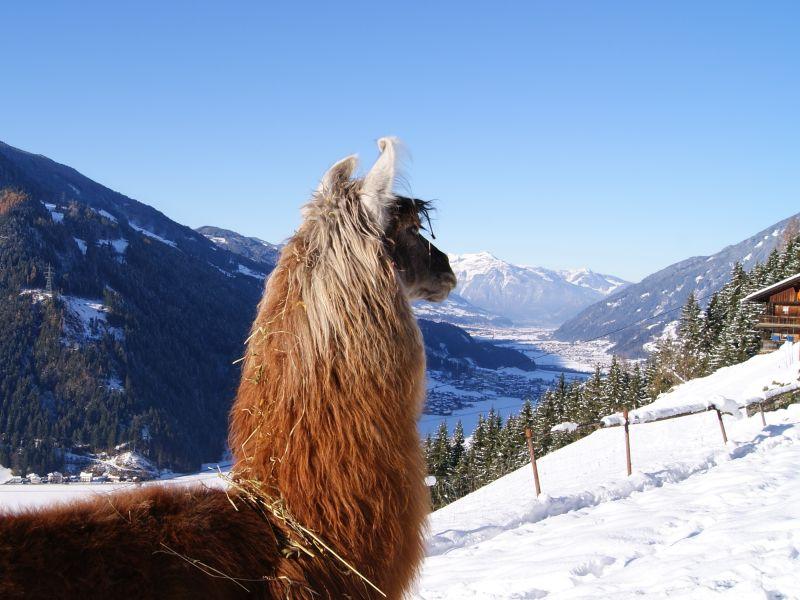 Holiday house Zillertal-Llamas