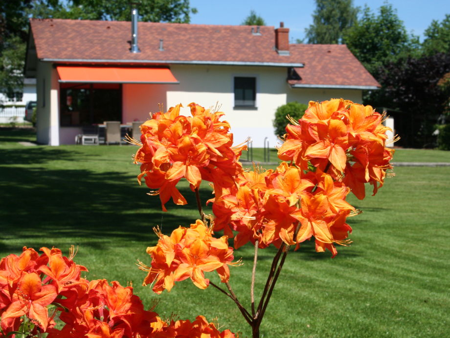 view backyard