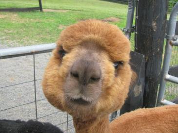 Ferienwohnung Alpacatestheim
