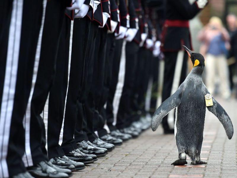 Ferienwohnung Pinguintestiglu