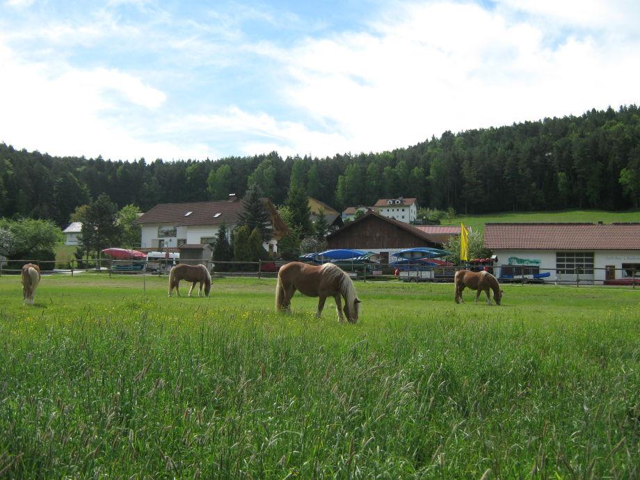Blick vom Fuß- und Radweg auf unseren Ferienhof