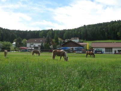 B Ferien- und Pferdehof Zankl