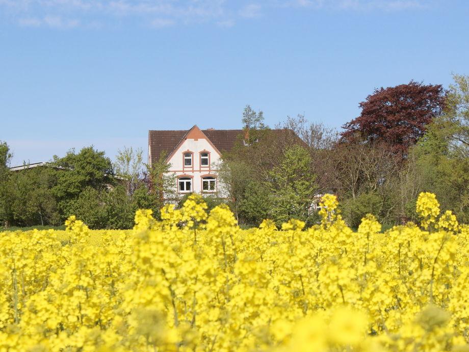 Bauernhaus vom südlichen Rapsfeld