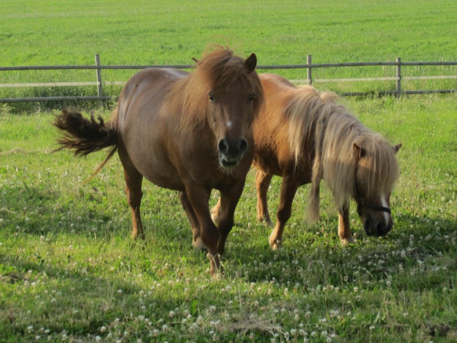 Die Ponies