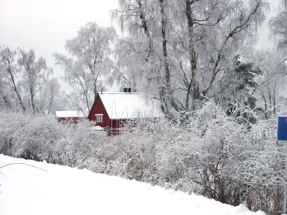 Tiefverschneit im Winter