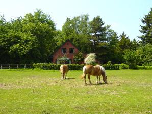 Ferienhaus in Lindern