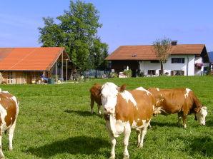 Ferienwohnung Bauernhof Josef Böck
