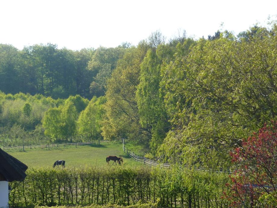 Blick zu Pferdekoppel und Wald