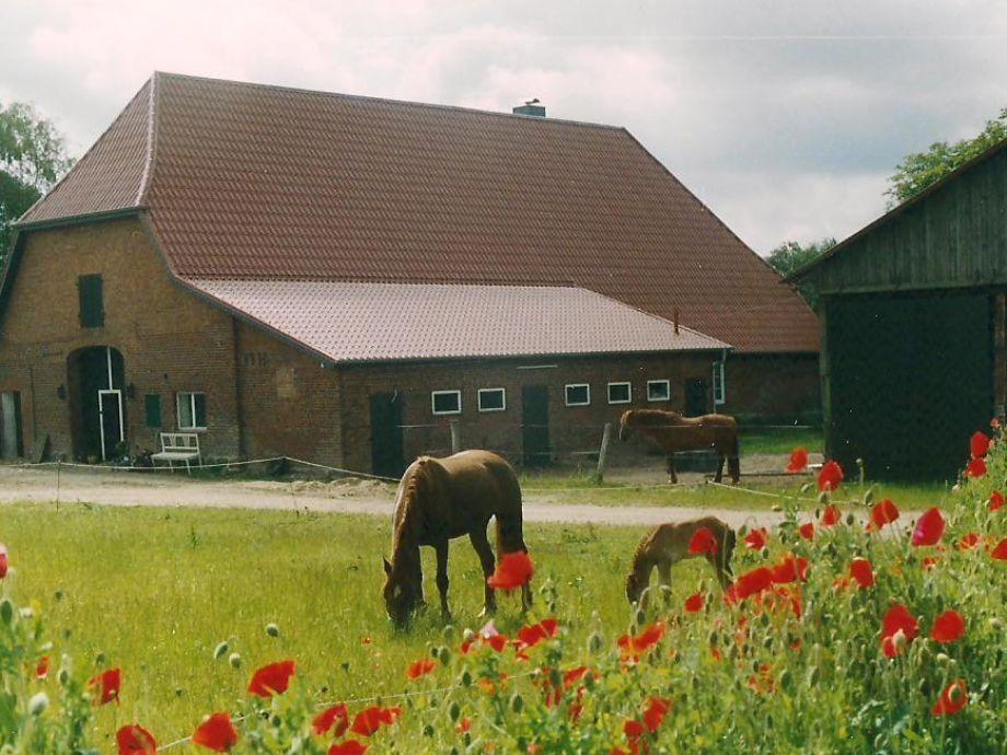 Romantische Alleinlage auf Hof mit Pferden