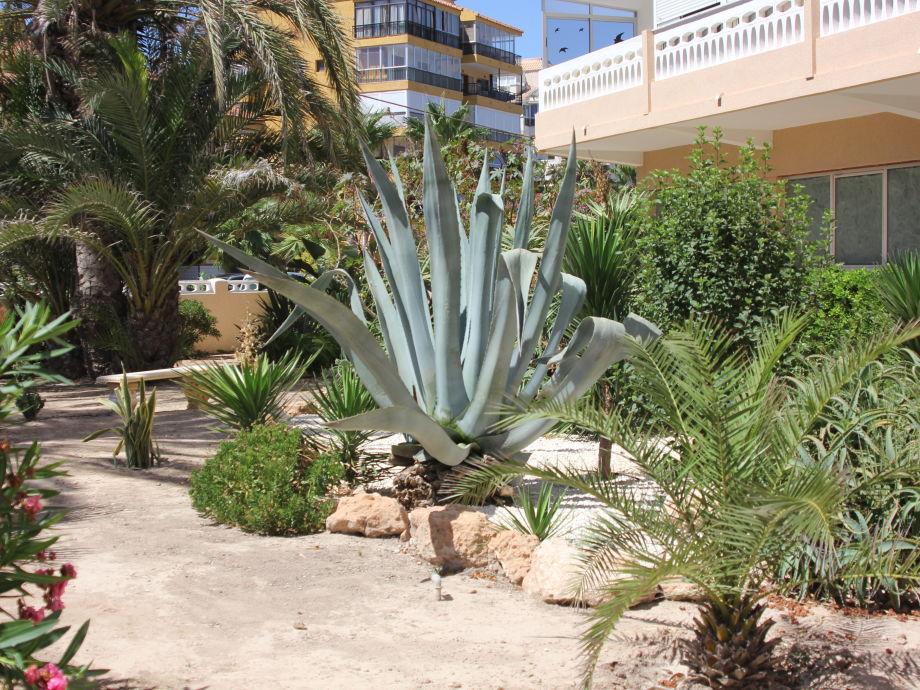 Vorgarten von unserer Ferienwohnung
